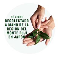 Fuji_Green_Tea